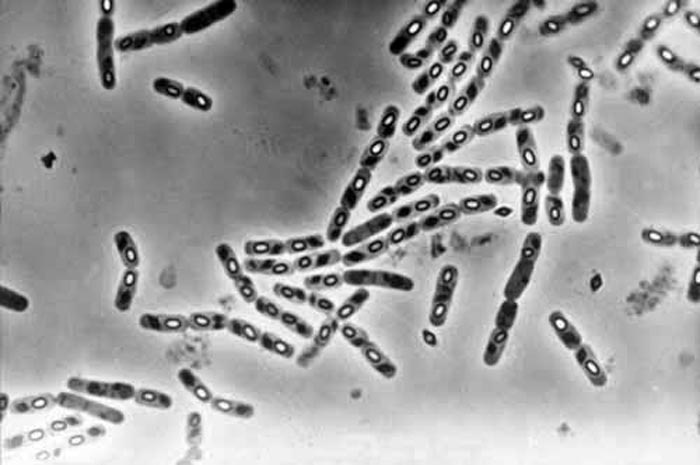 bacillus thuringiensis israelensis  controllare le
