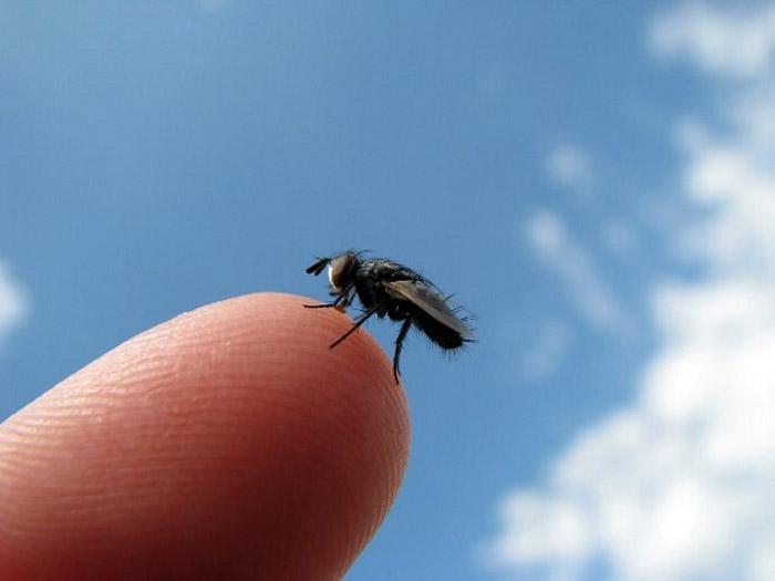 Come eliminare le mosche che proliferano in casa hampton - Come eliminare le onde elettromagnetiche in casa ...