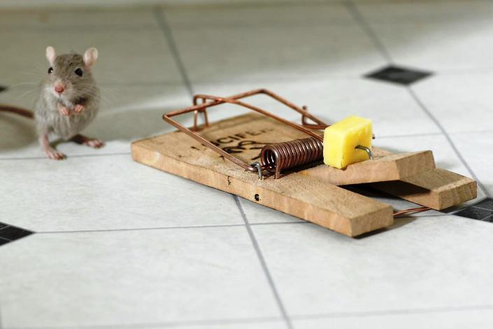 Topi in casa ecco come eliminarli hampton - Come uccidere i topi in casa ...