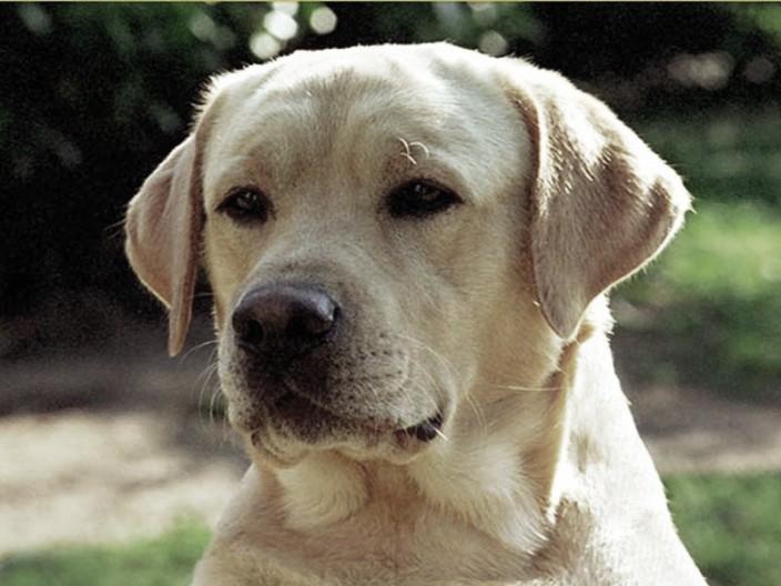 medicina per cani per minzione frequente