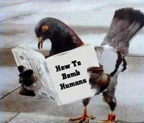 piccione-02