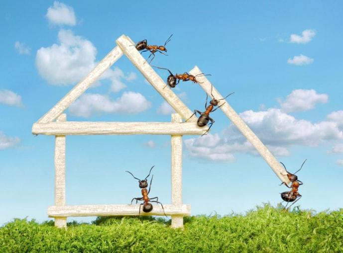 colonie di formiche