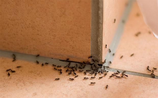 passaggio formiche