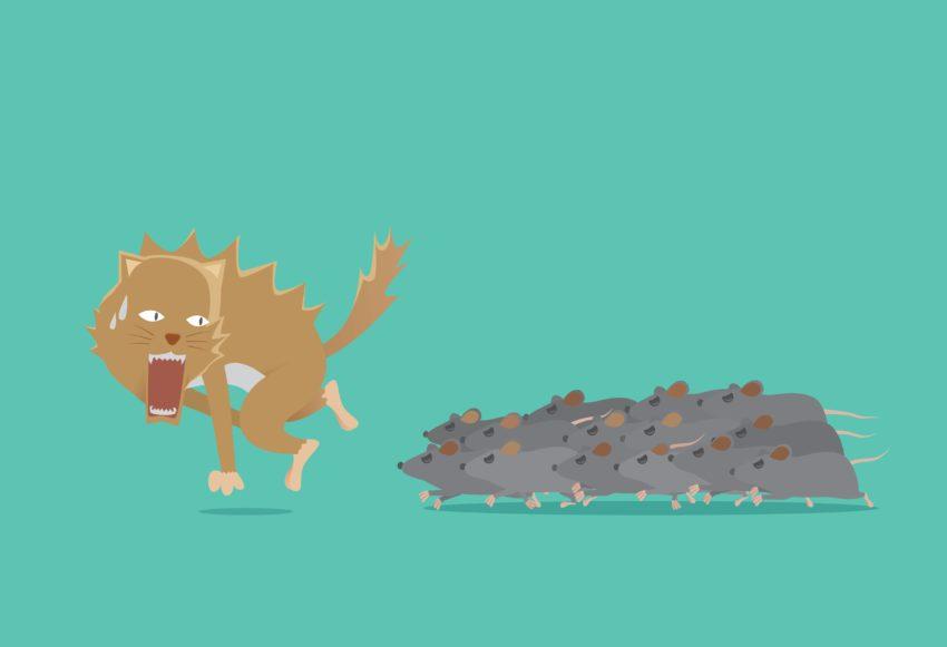 Gatto e topi