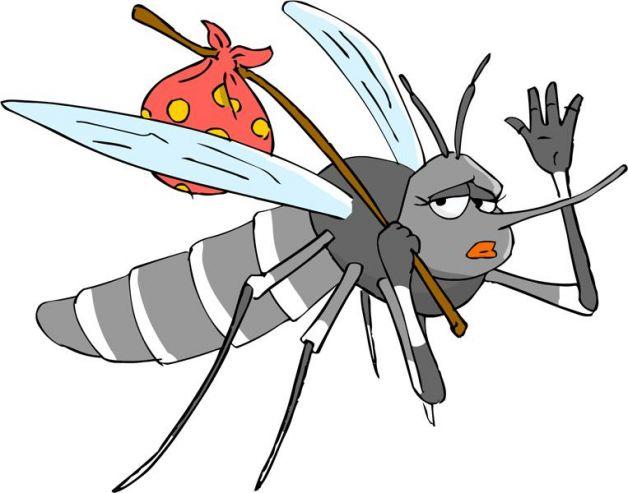 eliminare le zanzare