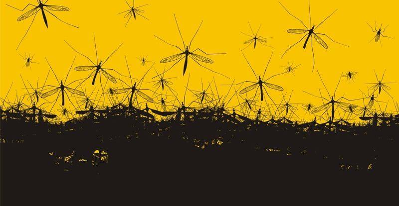Ritorna l 39 estate scatta l 39 allarme zanzare hampton for Soluzioni zanzare giardino