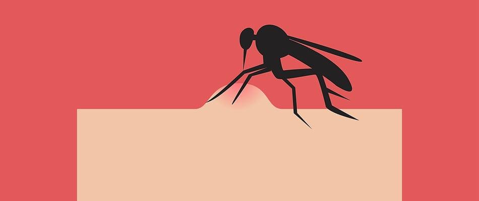 morso zanzara allergici